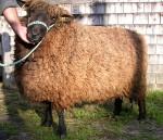 Bubba with his big fleece